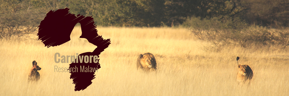http://carnivoreresearchmalawi.org/images/CRMwrapperlion.jpg